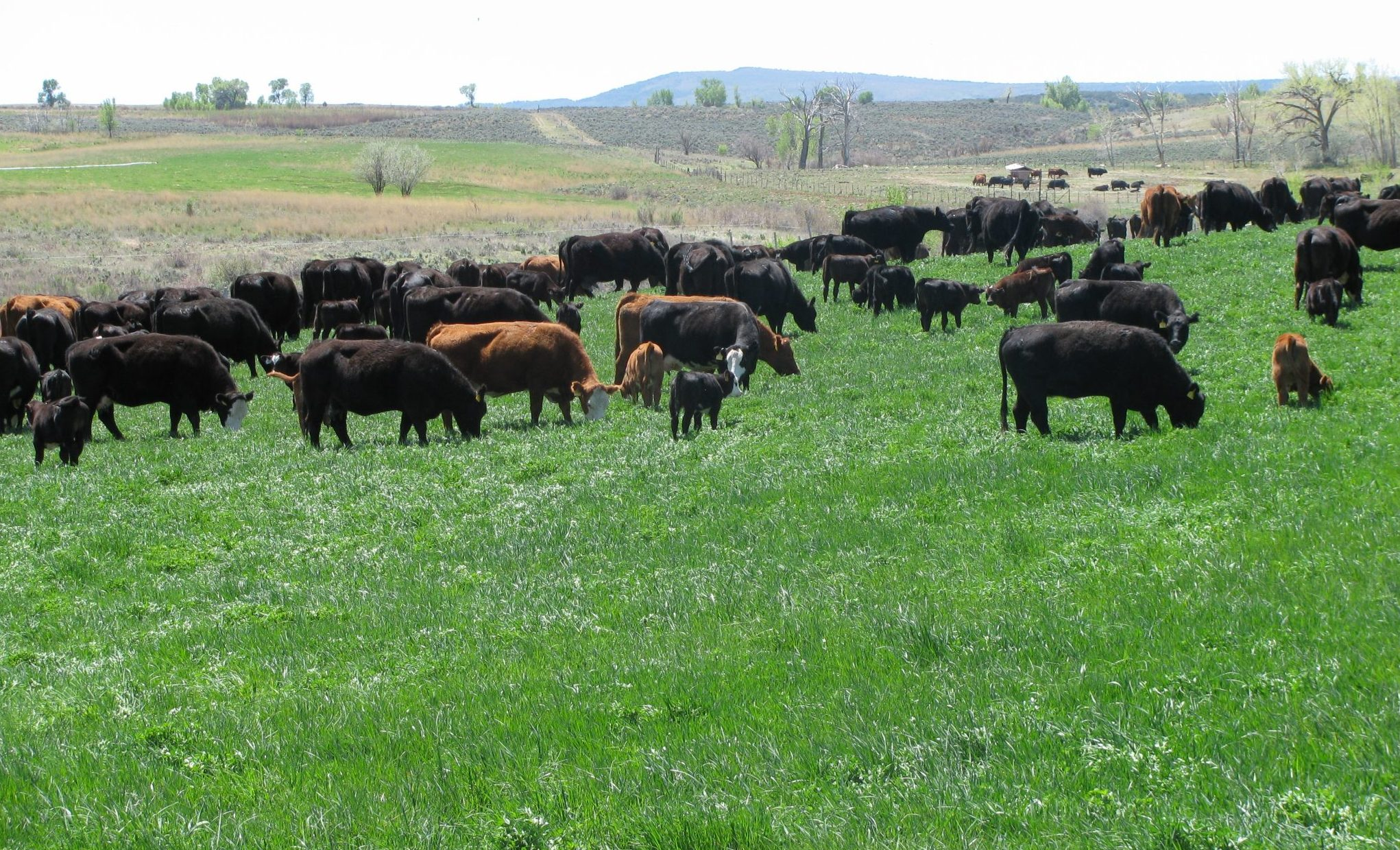 PASTURE RAISED COLORADO MEATS